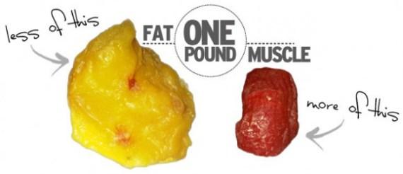 1 pound fat vs 1 pound muscle
